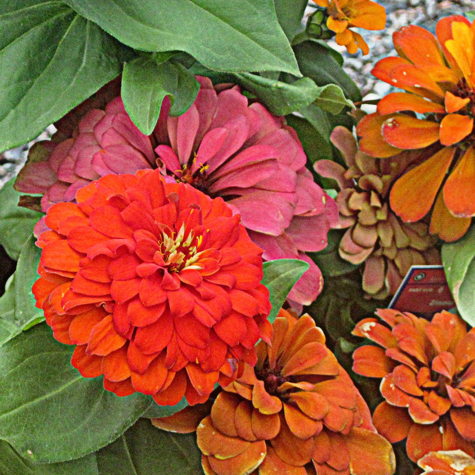 exceptional best fall flowers Part - 4: exceptional best fall flowers great pictures