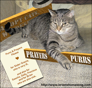 Purrs Needed at Brians Home (Sidebar Size)