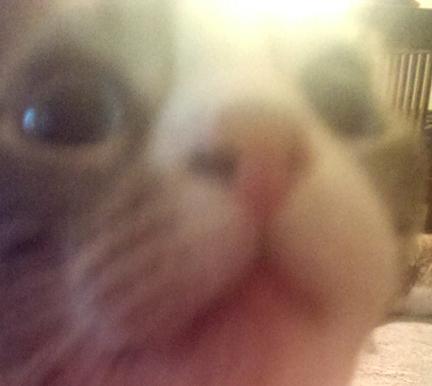 Kunckles Selfie