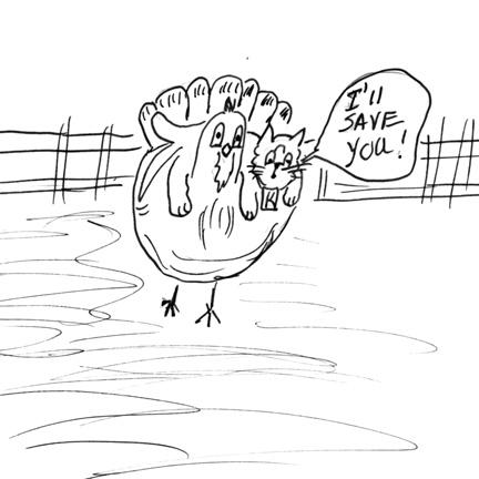 turkey savesm