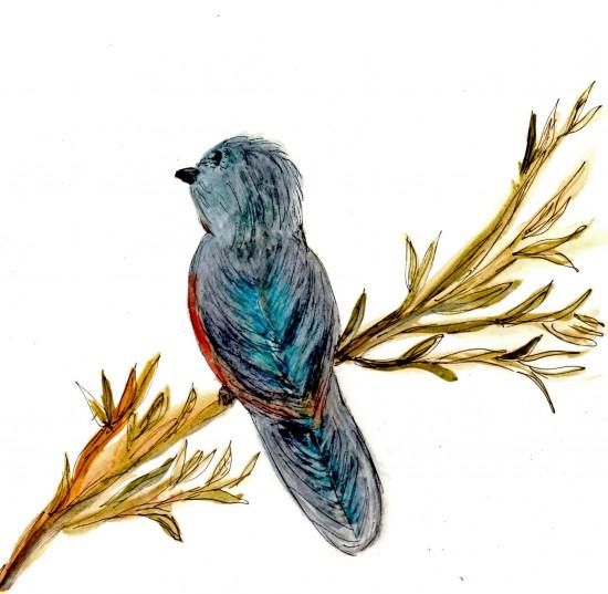 0001 Bird