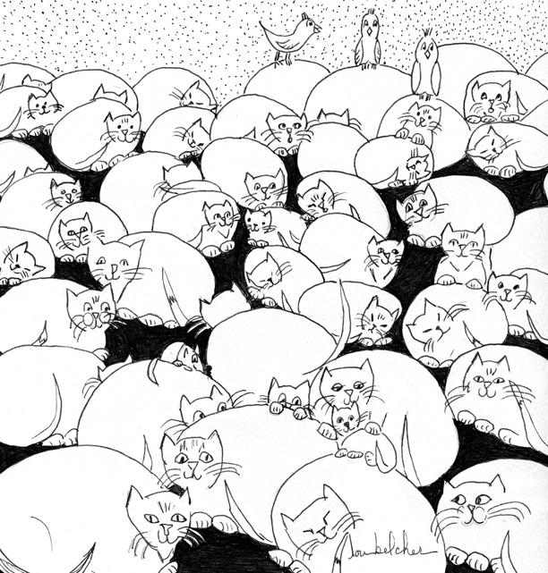 BOULDER CATS